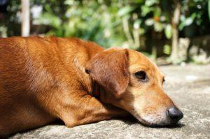 Este viernes 17, San Antón: bendición de animales a las 19.30 horas